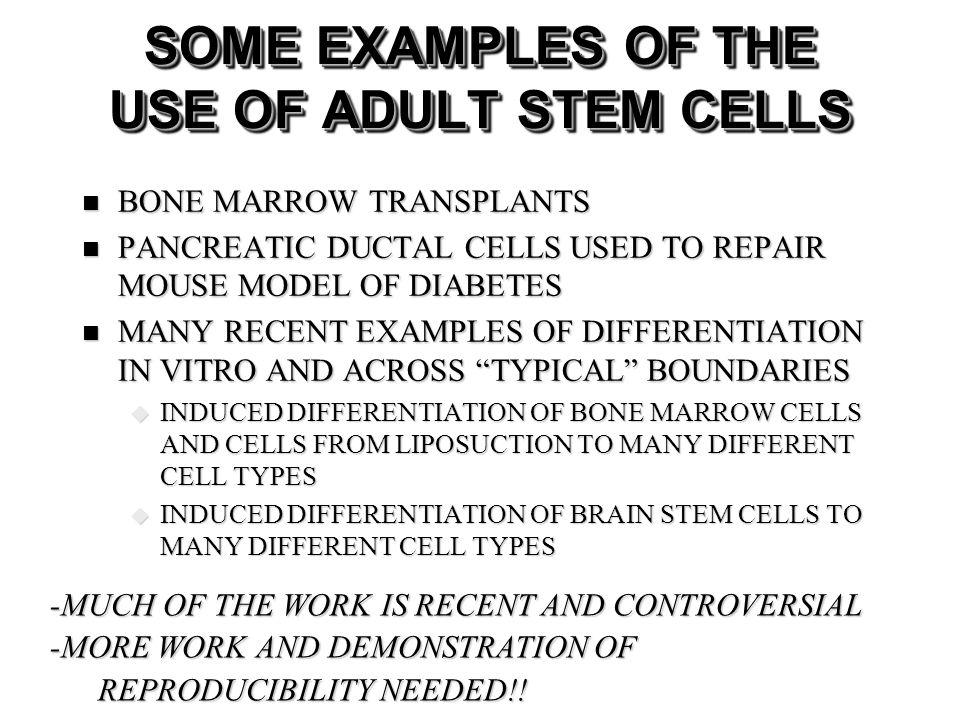 SOME EXAMPLES OF THE USE OF ADULT STEM CELLS BONE MARROW TRANSPLANTS BONE MARROW TRANSPLANTS PANCREATIC DUCTAL CELLS USED TO REPAIR MOUSE MODEL OF DIABETES PANCREATIC DUCTAL CELLS USED TO REPAIR MOUSE MODEL OF DIABETES MANY RECENT EXAMPLES OF DIFFERENTIATION IN VITRO AND ACROSS TYPICAL BOUNDARIES MANY RECENT EXAMPLES OF DIFFERENTIATION IN VITRO AND ACROSS TYPICAL BOUNDARIES INDUCED DIFFERENTIATION OF BONE MARROW CELLS AND CELLS FROM LIPOSUCTION TO MANY DIFFERENT CELL TYPES INDUCED DIFFERENTIATION OF BONE MARROW CELLS AND CELLS FROM LIPOSUCTION TO MANY DIFFERENT CELL TYPES INDUCED DIFFERENTIATION OF BRAIN STEM CELLS TO MANY DIFFERENT CELL TYPES INDUCED DIFFERENTIATION OF BRAIN STEM CELLS TO MANY DIFFERENT CELL TYPES -MUCH OF THE WORK IS RECENT AND CONTROVERSIAL -MORE WORK AND DEMONSTRATION OF REPRODUCIBILITY NEEDED!!