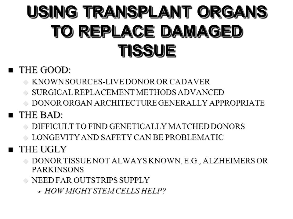 USING TRANSPLANT ORGANS TO REPLACE DAMAGED TISSUE THE GOOD: THE GOOD: KNOWN SOURCES-LIVE DONOR OR CADAVER KNOWN SOURCES-LIVE DONOR OR CADAVER SURGICAL REPLACEMENT METHODS ADVANCED SURGICAL REPLACEMENT METHODS ADVANCED DONOR ORGAN ARCHITECTURE GENERALLY APPROPRIATE DONOR ORGAN ARCHITECTURE GENERALLY APPROPRIATE THE BAD: THE BAD: DIFFICULT TO FIND GENETICALLY MATCHED DONORS DIFFICULT TO FIND GENETICALLY MATCHED DONORS LONGEVITY AND SAFETY CAN BE PROBLEMATIC LONGEVITY AND SAFETY CAN BE PROBLEMATIC THE UGLY THE UGLY DONOR TISSUE NOT ALWAYS KNOWN, E.G., ALZHEIMERS OR PARKINSONS DONOR TISSUE NOT ALWAYS KNOWN, E.G., ALZHEIMERS OR PARKINSONS NEED FAR OUTSTRIPS SUPPLY NEED FAR OUTSTRIPS SUPPLY HOW MIGHT STEM CELLS HELP.