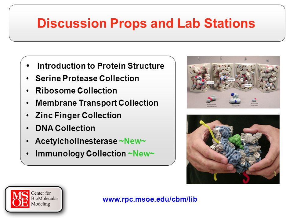 Introduction to Protein Structure Serine Protease Collection Ribosome Collection Membrane Transport Collection Zinc Finger Collection DNA Collection Acetylcholinesterase ~New~ Immunology Collection ~New~ Discussion Props and Lab Stations