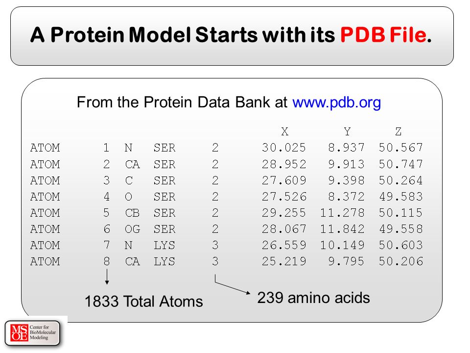 A Protein Model Starts with its PDB File.