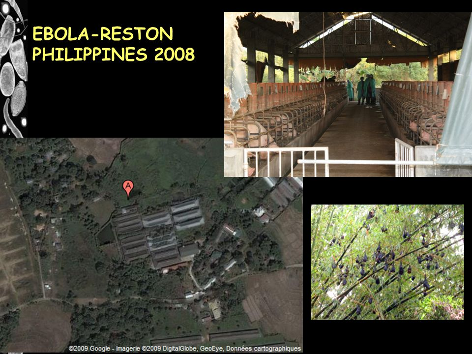 EBOLA-RESTON PHILIPPINES 2008