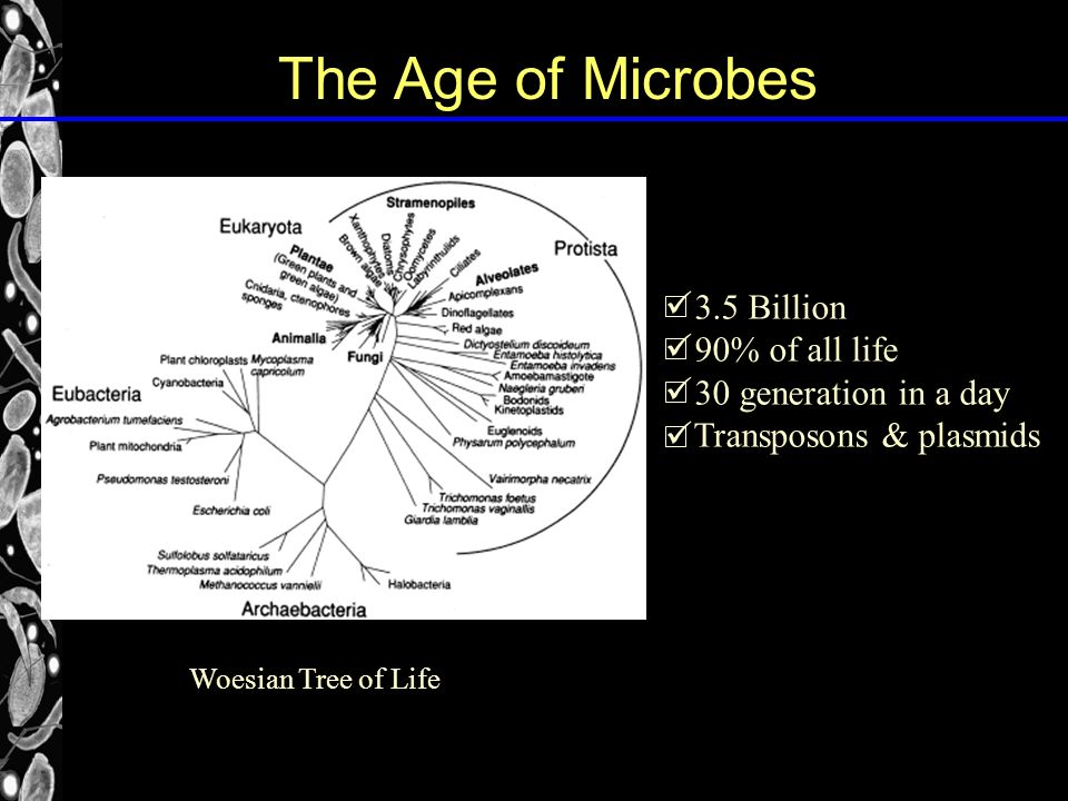 Woesian Tree of Life 3.5 Billion 90% of all life 30 generation in a day Transposons & plasmids The Age of Microbes