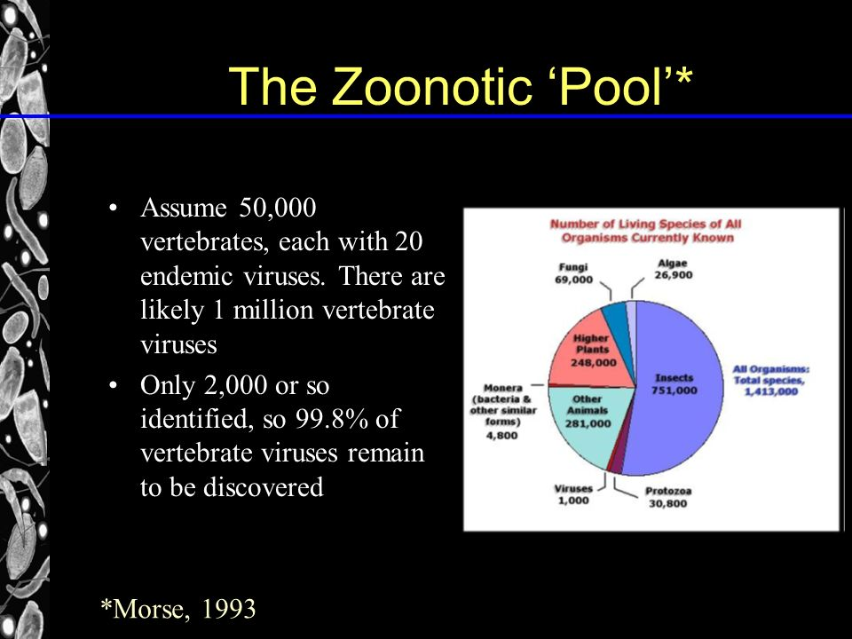 The Zoonotic Pool* Assume 50,000 vertebrates, each with 20 endemic viruses.