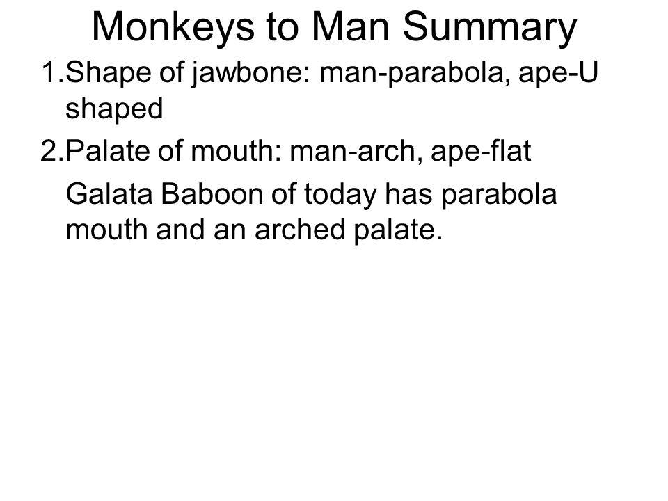Monkeys to Man Summary 1.Shape of jawbone: man-parabola, ape-U shaped 2.Palate of mouth: man-arch, ape-flat Galata Baboon of today has parabola mouth