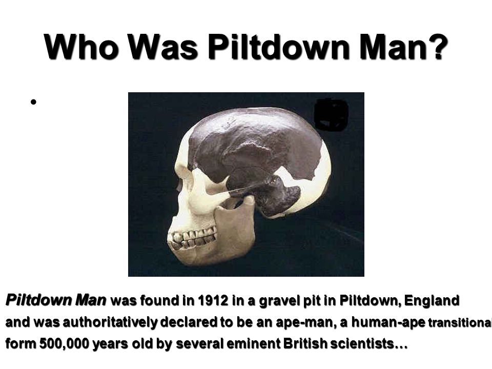 Piltdown Man was found in 1912 in a gravel pit in Piltdown, England and was authoritatively declared to be an ape-man, a human-ape transitional form 5