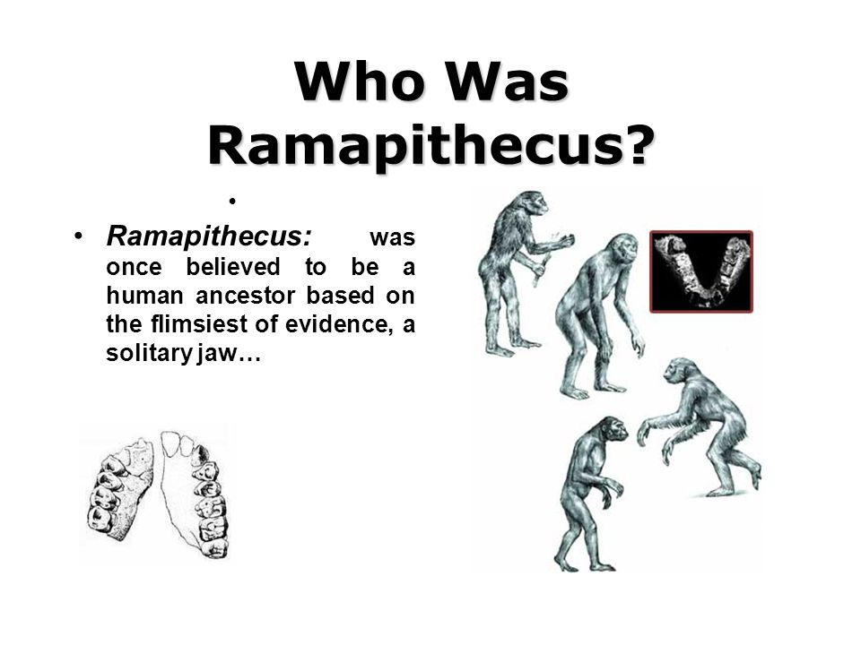Who Was Ramapithecus? Ramapithecus: was once believed to be a human ancestor based on the flimsiest of evidence, a solitary jaw…