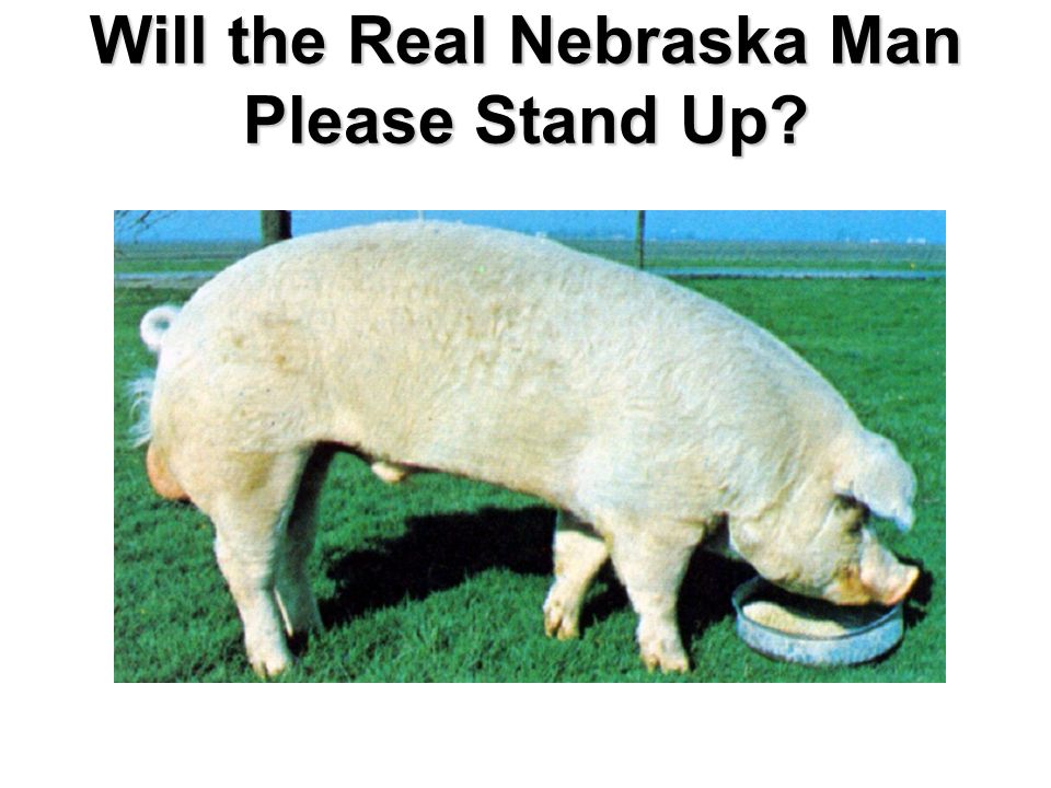 Will the Real Nebraska Man Please Stand Up?