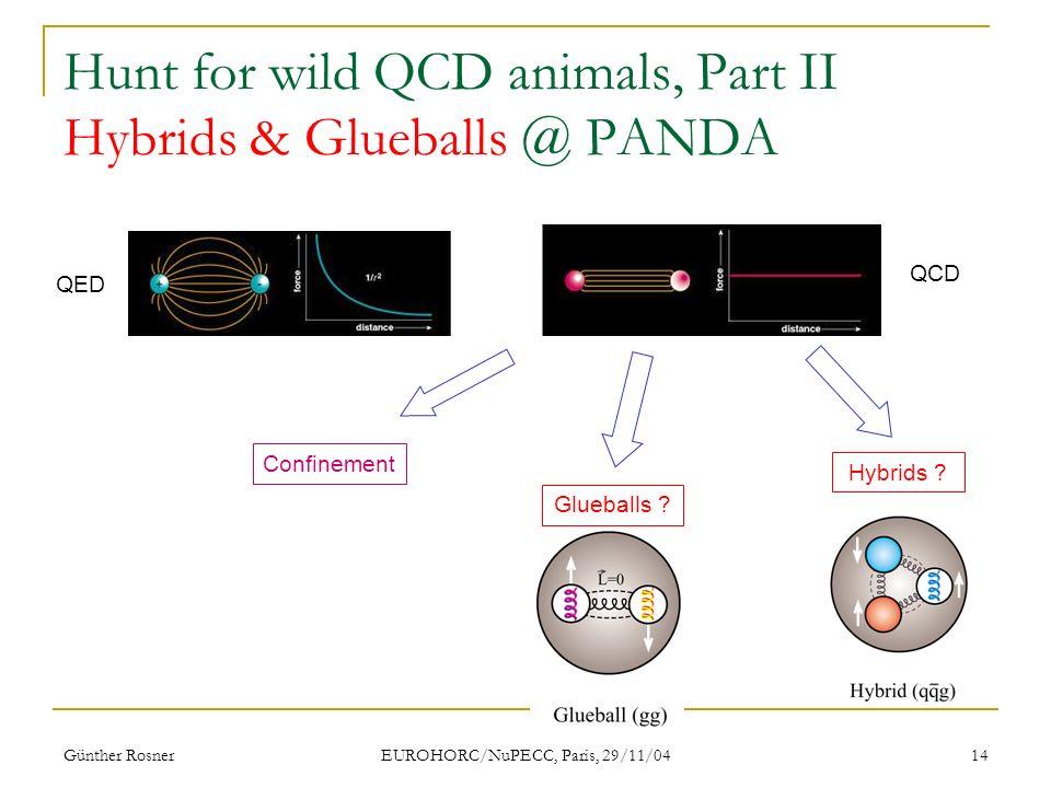 Günther Rosner EUROHORC/NuPECC, Paris, 29/11/04 14 Hunt for wild QCD animals, Part II Hybrids & Glueballs @ PANDA QED QCD Confinement Hybrids .