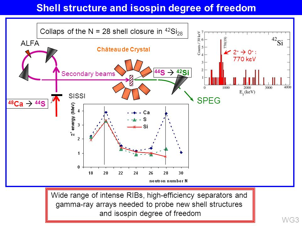 Collaps of the N = 28 shell closure in 42 Si 28 SPEG SISSI Secondary beams 48 Ca 44 S 44 S 42 Si Château de Crystal 2 + 0 + : 770 keV Wide range of intense RIBs, high-efficiency separators and gamma-ray arrays needed to probe new shell structures and isospin degree of freedom WG3 ALFA Shell structure and isospin degree of freedom