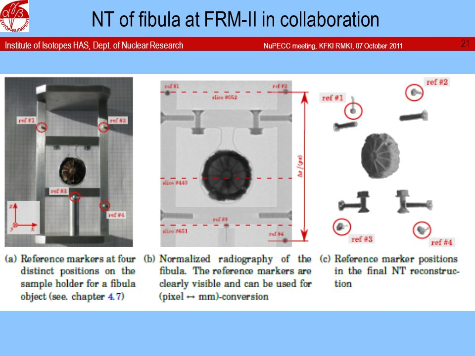 Institute of Isotopes HAS, Dept. of Nuclear Research NuPECC meeting, KFKI RMKI, 07 October 2011 NT of fibula at FRM-II in collaboration 21