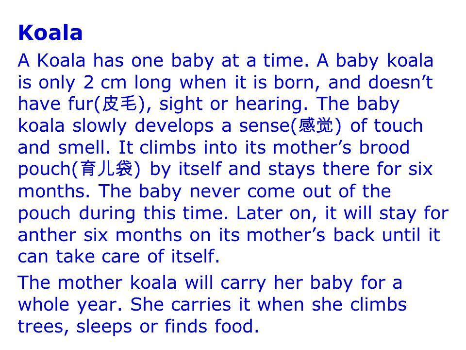 Koala A Koala has one baby at a time.