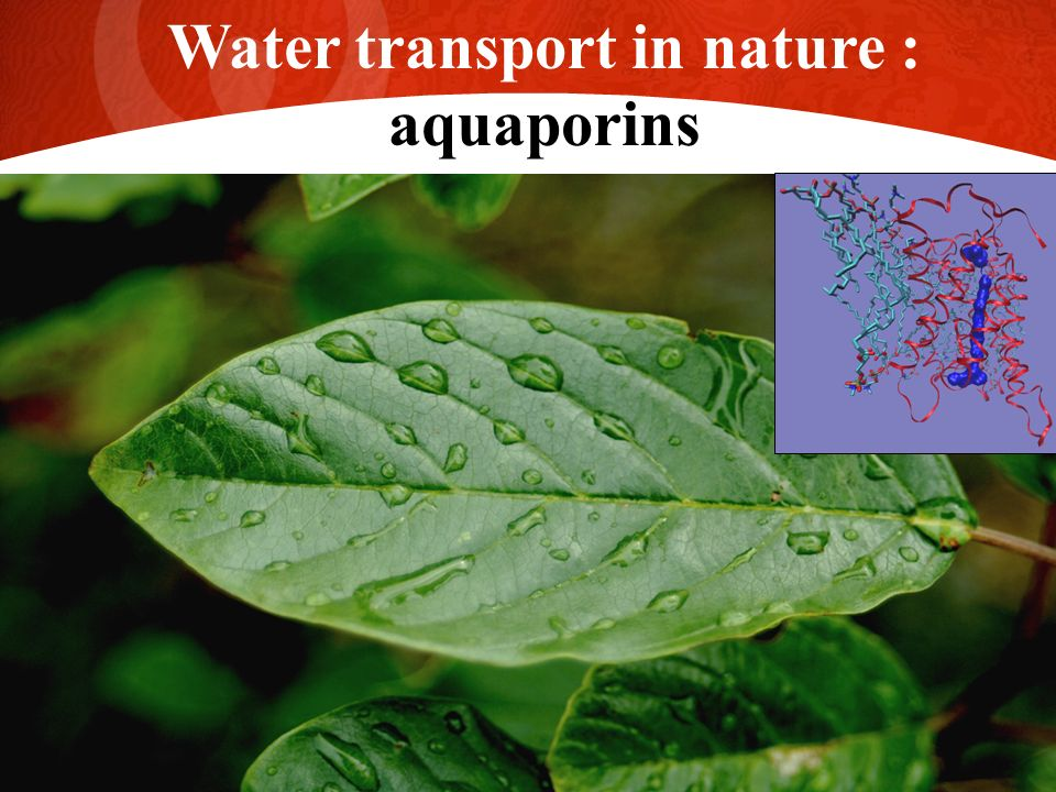 27 Water transport in nature : aquaporins