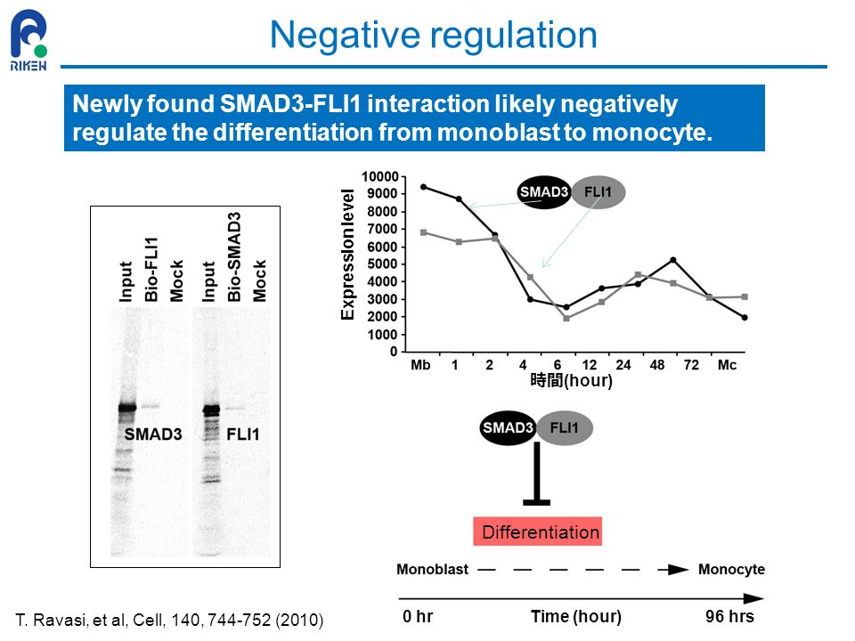 Negative regulation (hour) Expression level Time (hour)0 hr96 hrs Differentiation Newly found SMAD3-FLI1 interaction likely negatively regulate the di
