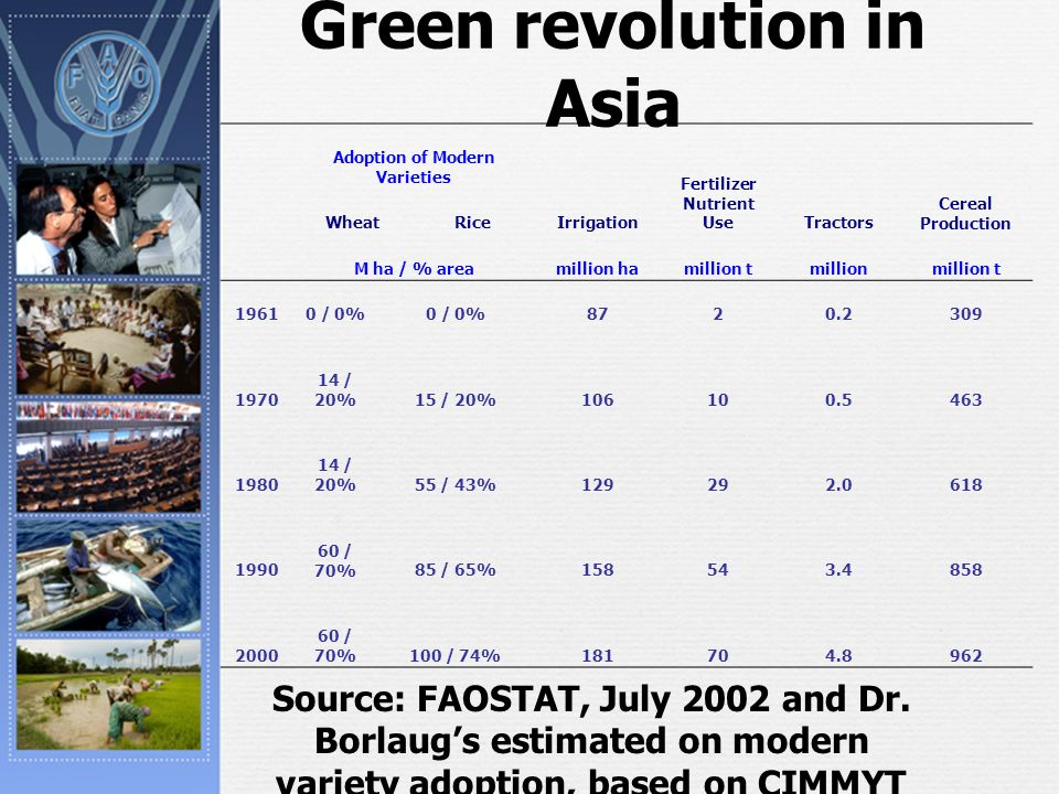 Green revolution in Asia Adoption of Modern Varieties Fertilizer Nutrient Use Cereal Production WheatRiceIrrigationTractors M ha / % areamillion hamillion tmillionmillion t 19610 / 0% 8720.2309 1970 14 / 20%15 / 20%106100.5463 1980 14 / 20%55 / 43%129292.0618 1990 60 / 70%85 / 65%158543.4858 2000 60 / 70%100 / 74%181704.8962 Source: FAOSTAT, July 2002 and Dr.