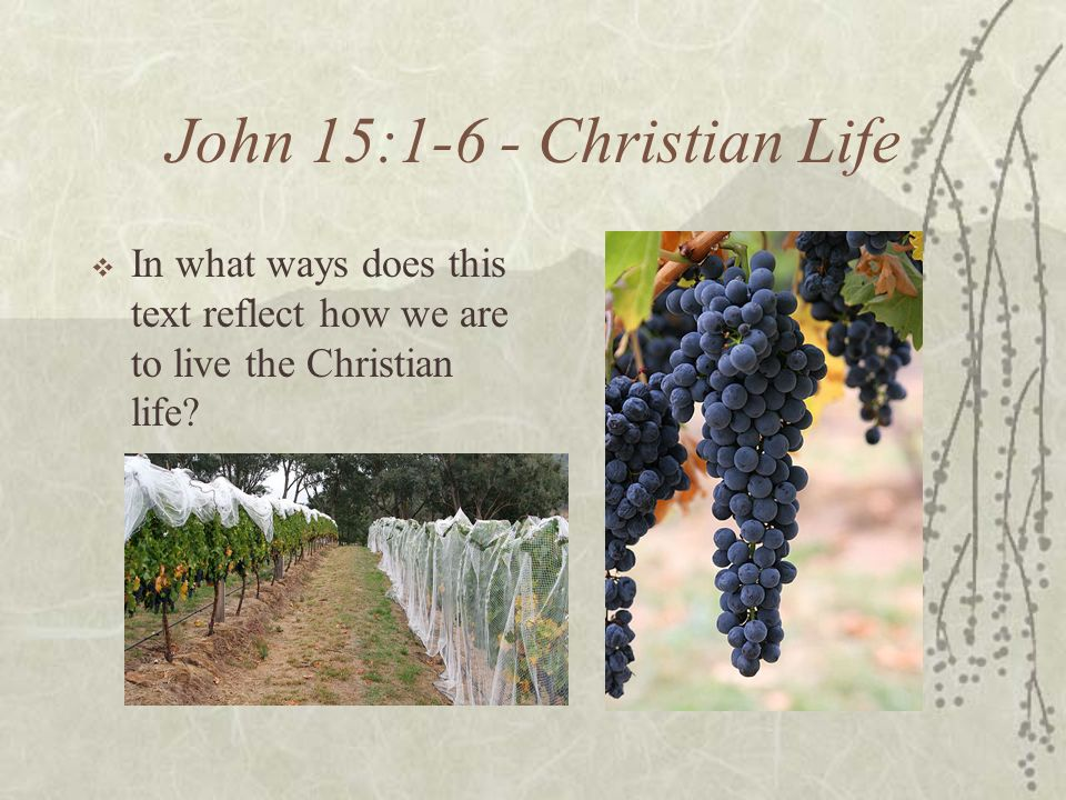 John 15:1-6 - Christian Life In what ways does this text reflect how we are to live the Christian life?