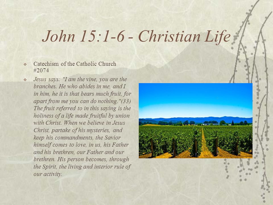 John 15:1-6 - Christian Life Catechism of the Catholic Church #2074 Jesus says: I am the vine, you are the branches.