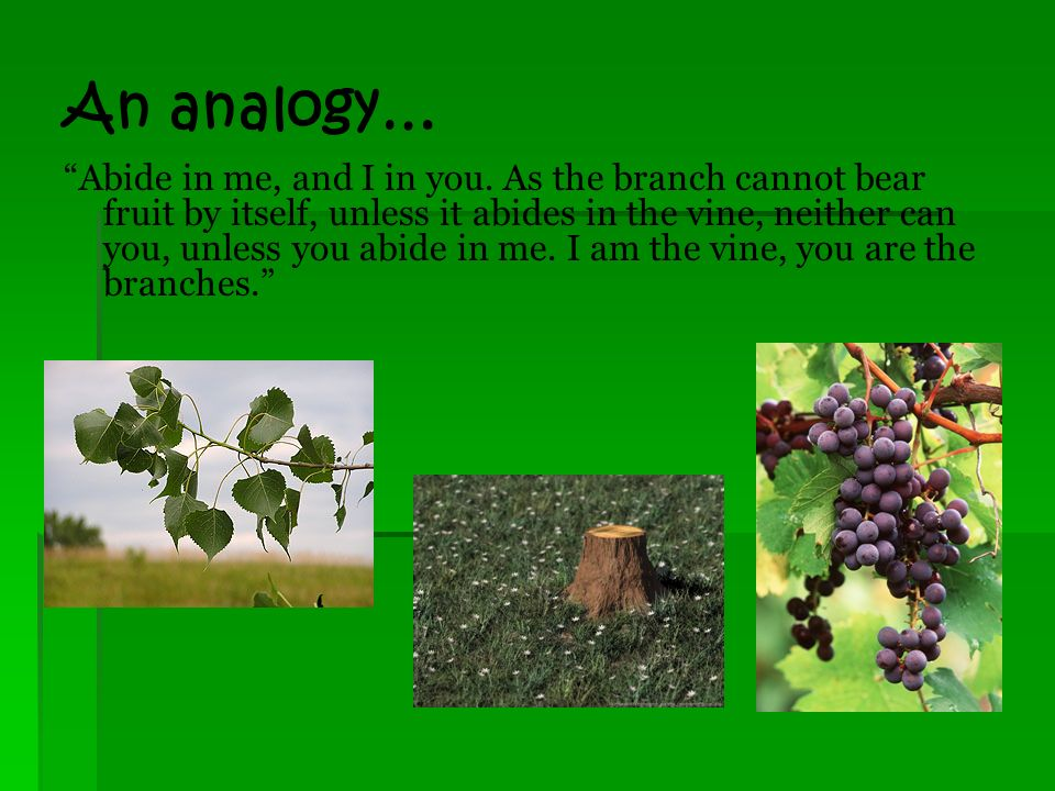 The Text: John 15: 1-8 I am the true vine, and my Father is the vinedresser.