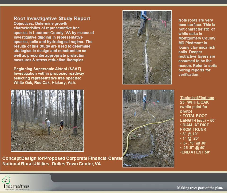 Root Investigative Study Report Objectives: Determine growth characteristics of representative tree species in Loudoun County, VA by means of investigative digging in representative species, soils and hydrological regime.