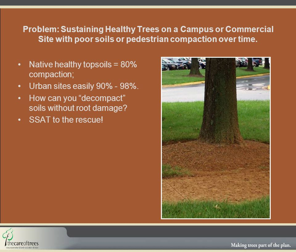 Problem: Sustaining Healthy Trees on a Campus or Commercial Site with poor soils or pedestrian compaction over time.