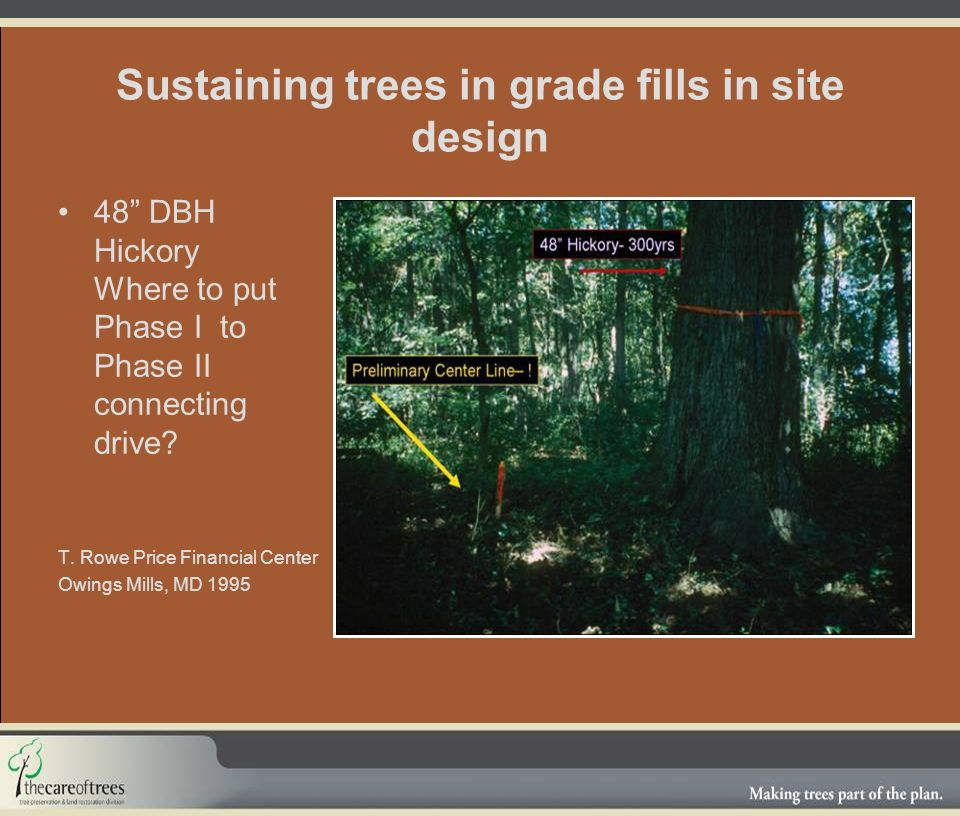 Sustaining trees in grade fills in site design 48 DBH Hickory Where to put Phase I to Phase II connecting drive.