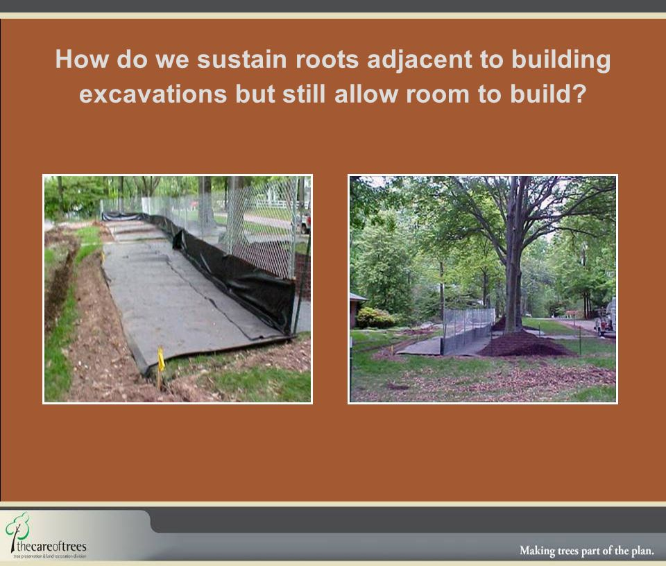 How do we sustain roots adjacent to building excavations but still allow room to build?