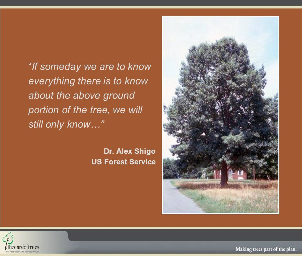 If someday we are to know everything there is to know about the above ground portion of the tree, we will still only know… Dr.