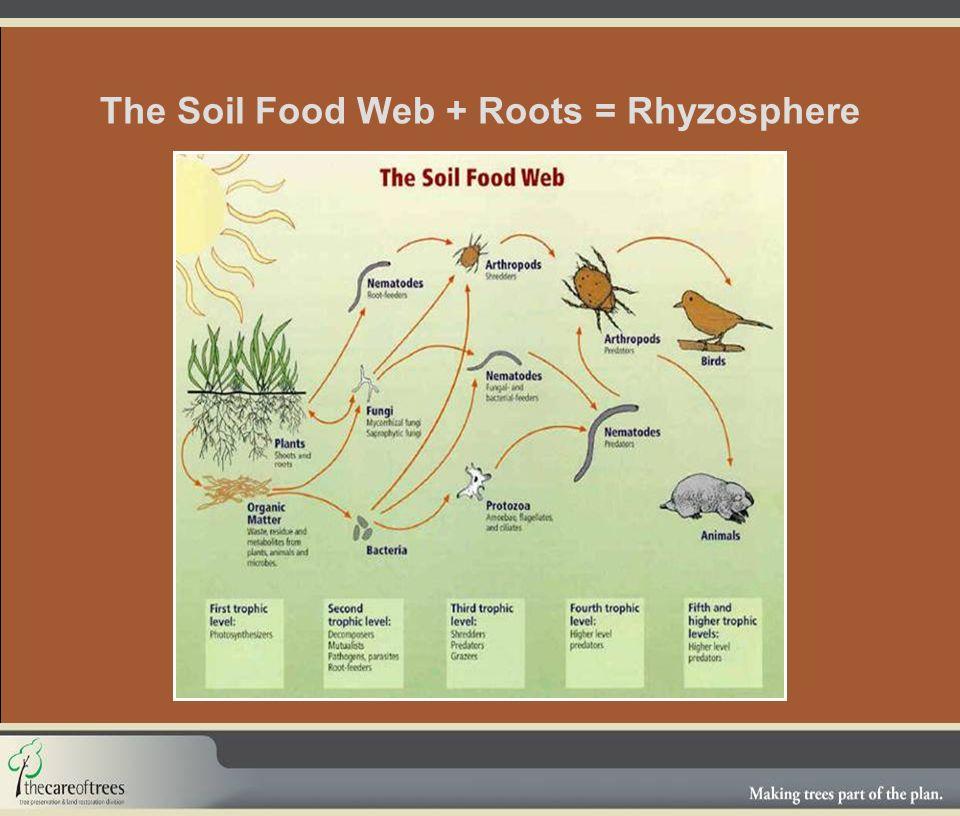 The Soil Food Web + Roots = Rhyzosphere