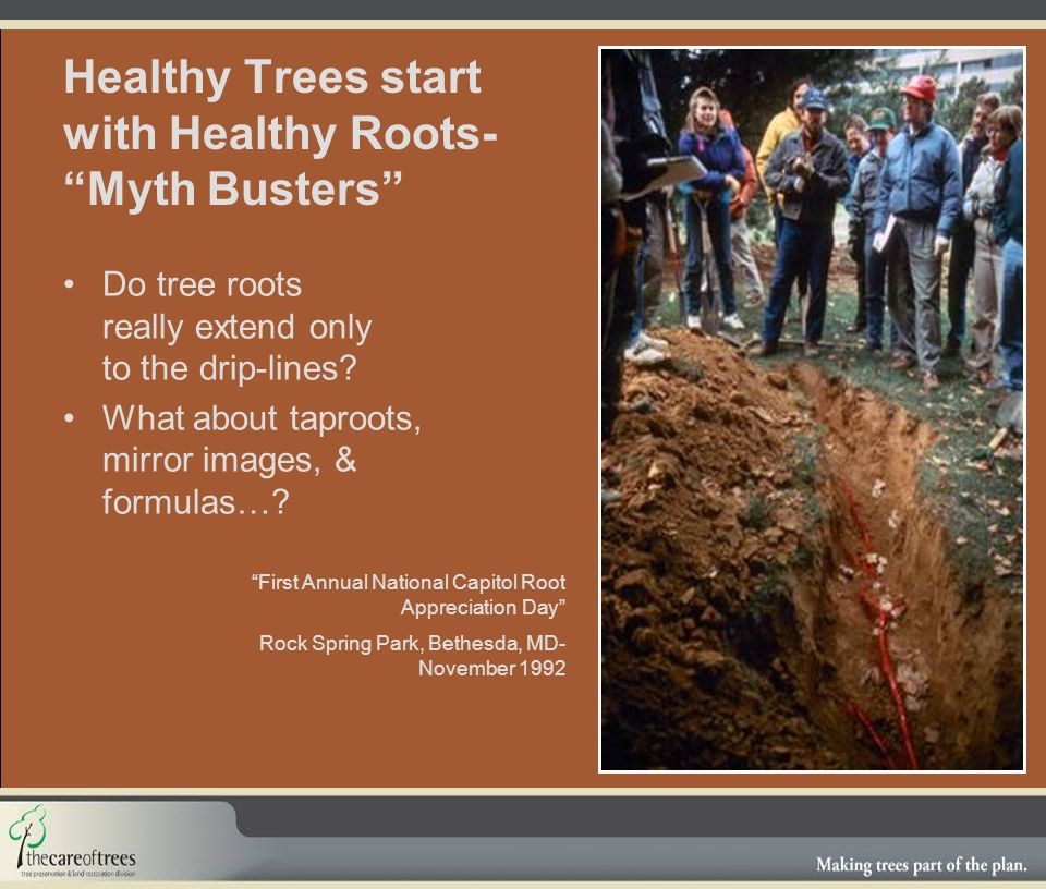 Healthy Trees start with Healthy Roots- Myth Busters Do tree roots really extend only to the drip-lines.