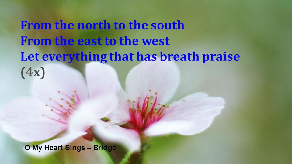 O My Heart Sings – Bridge From the north to the south From the east to the west Let everything that has breath praise (4x)