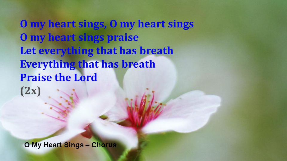 O My Heart Sings – Chorus O my heart sings, O my heart sings O my heart sings praise Let everything that has breath Everything that has breath Praise the Lord (2x)