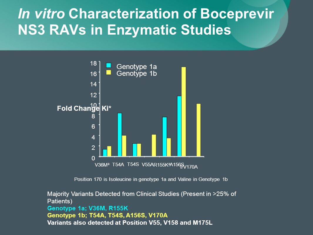 In vitro Characterization of Boceprevir NS3 RAVs in Enzymatic Studies Position 170 is Isoleucine in genotype 1a and Valine in Genotype 1b 0 2 4 6 8 10 12 14 16 18 V36M a T54A T54S V55A R155K a A156S I/V170A Fold Change Ki* Genotype 1a Genotype 1b Majority Variants Detected from Clinical Studies (Present in >25% of Patients) Genotype 1a; V36M, R155K Genotype 1b; T54A, T54S, A156S, V170A Variants also detected at Position V55, V158 and M175L
