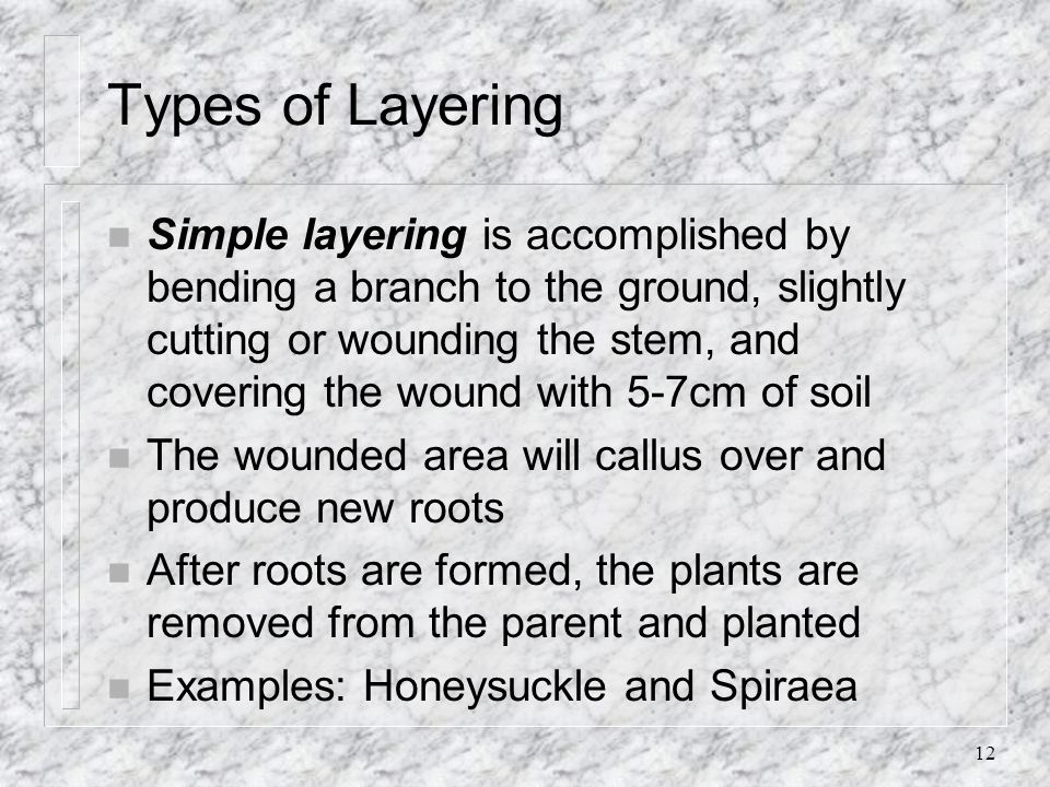 12 Types of Layering n Simple layering is accomplished by bending a branch to the ground, slightly cutting or wounding the stem, and covering the woun