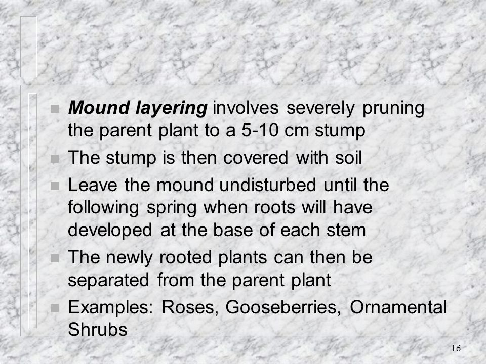 16 n Mound layering involves severely pruning the parent plant to a 5-10 cm stump n The stump is then covered with soil n Leave the mound undisturbed