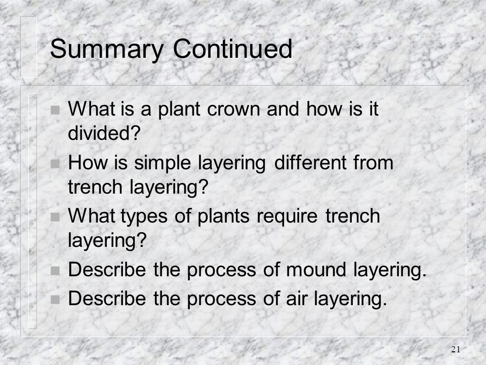 21 Summary Continued n What is a plant crown and how is it divided? n How is simple layering different from trench layering? n What types of plants re