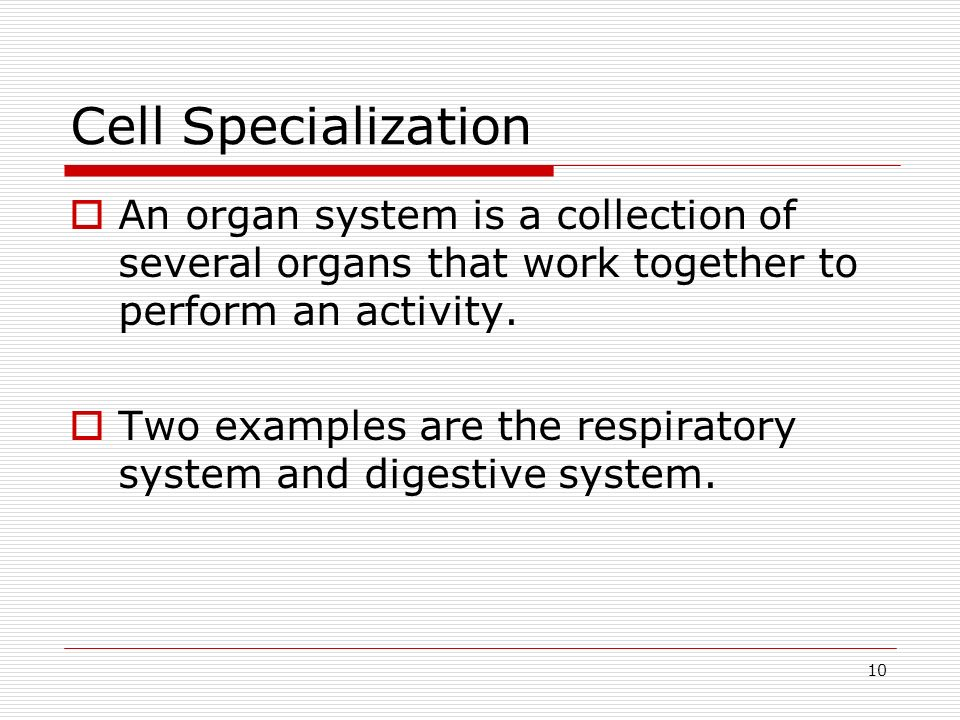 10 Cell Specialization An organ system is a collection of several organs that work together to perform an activity. Two examples are the respiratory s