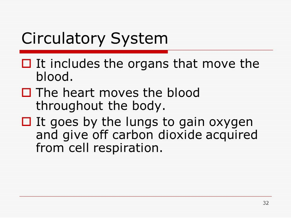 32 Circulatory System It includes the organs that move the blood. The heart moves the blood throughout the body. It goes by the lungs to gain oxygen a