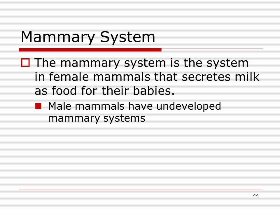 44 Mammary System The mammary system is the system in female mammals that secretes milk as food for their babies. Male mammals have undeveloped mammar