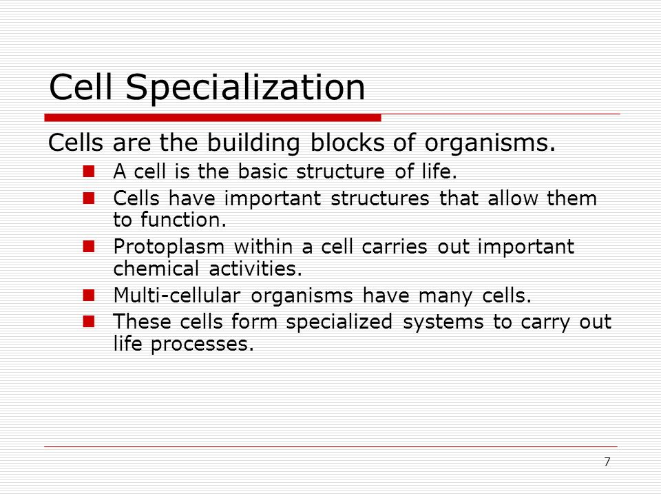 7 Cell Specialization Cells are the building blocks of organisms. A cell is the basic structure of life. Cells have important structures that allow th