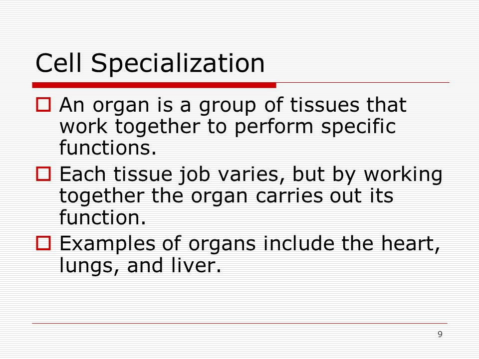 9 Cell Specialization An organ is a group of tissues that work together to perform specific functions. Each tissue job varies, but by working together