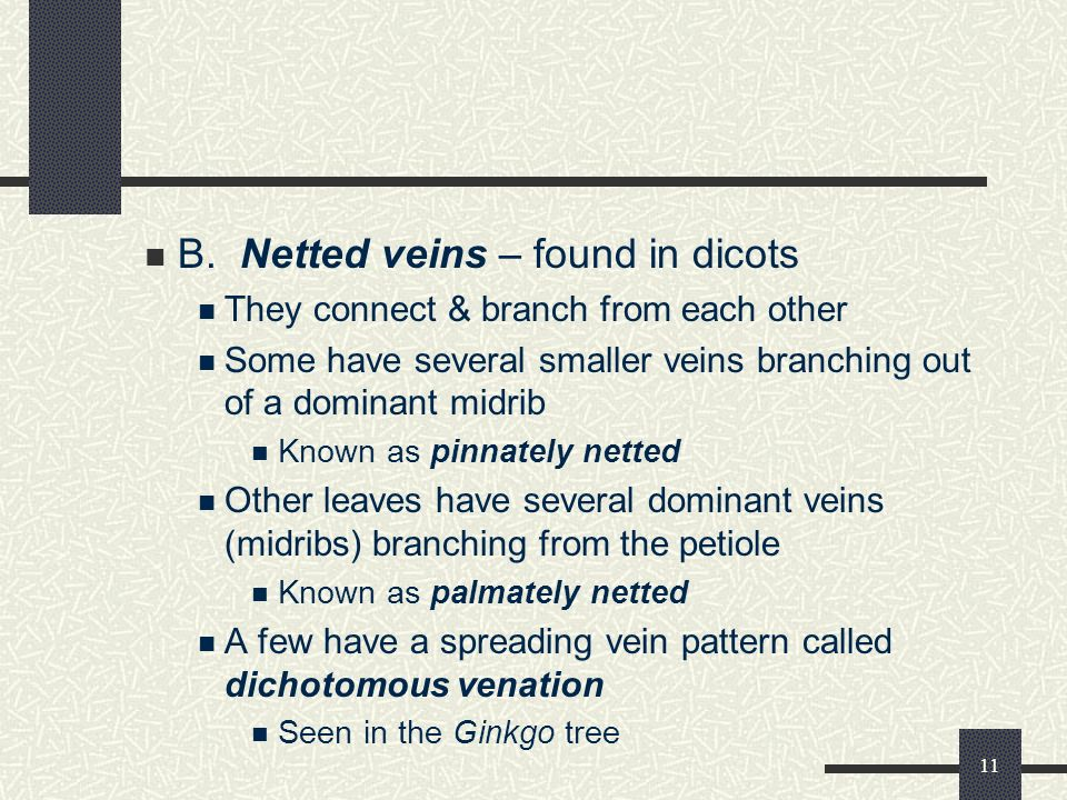 10 What Are Some Vein Patterns Found in Leaves? Veins of flowering plants are found in several patterns Most patterns can be categorized into two main