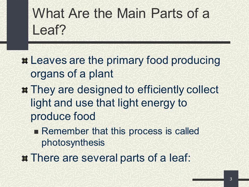 2 Vocabulary Compound leaf Cuticle Dichotomous venation Epidermis Guard cells Leaf blade Midrib Palisade mesophyll Parallel veins Petiole Pinnately ne
