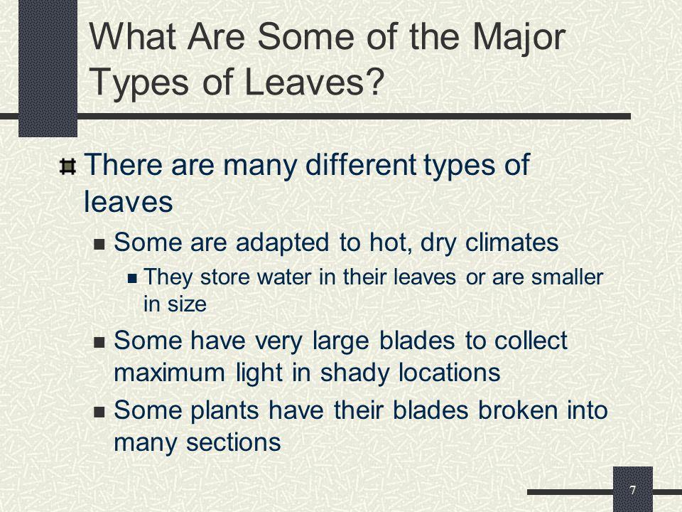 6 Main Parts of a Leaf Tip/Apex Midrib Margin Veins Base Petiole Blade Leaf Courtesy of Corinne Banowski