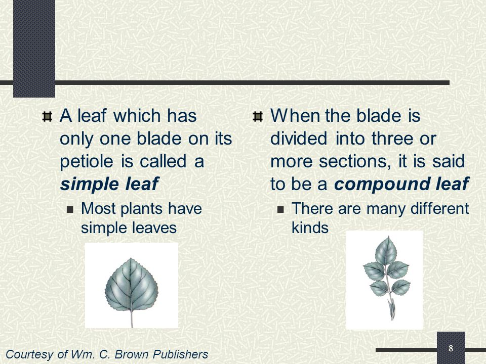 7 What Are Some of the Major Types of Leaves? There are many different types of leaves Some are adapted to hot, dry climates They store water in their