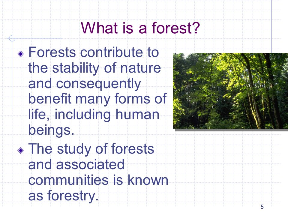 5 What is a forest? Forests contribute to the stability of nature and consequently benefit many forms of life, including human beings. The study of fo