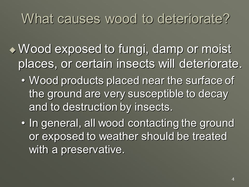 4 What causes wood to deteriorate? Wood exposed to fungi, damp or moist places, or certain insects will deteriorate. Wood exposed to fungi, damp or mo