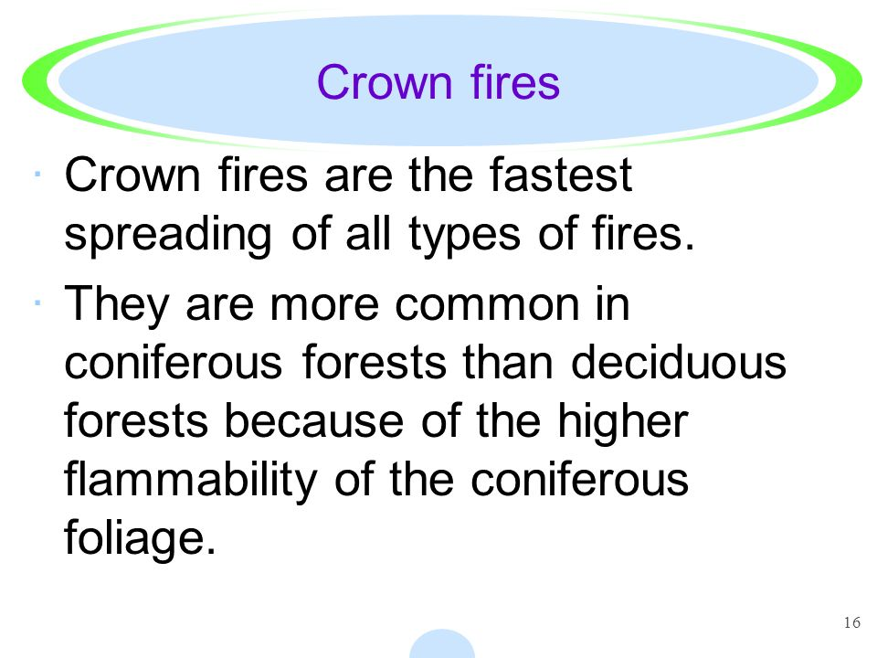 16 Crown fires ·Crown fires are the fastest spreading of all types of fires. ·They are more common in coniferous forests than deciduous forests becaus