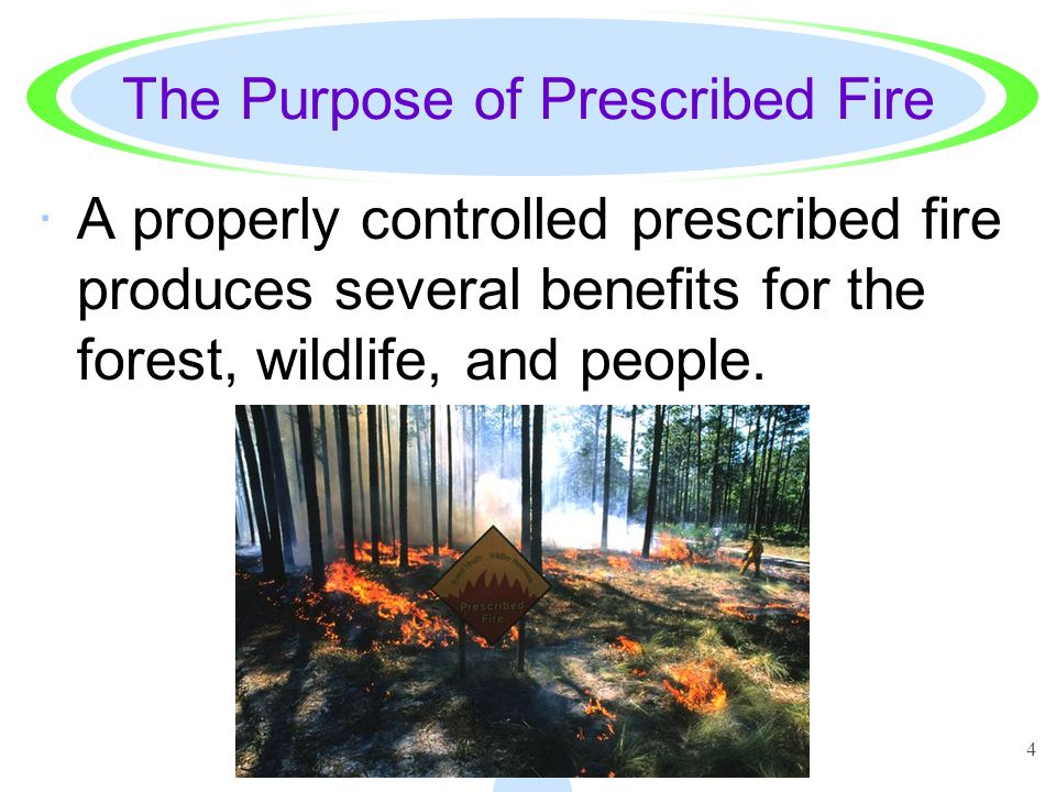 4 The Purpose of Prescribed Fire ·A properly controlled prescribed fire produces several benefits for the forest, wildlife, and people.