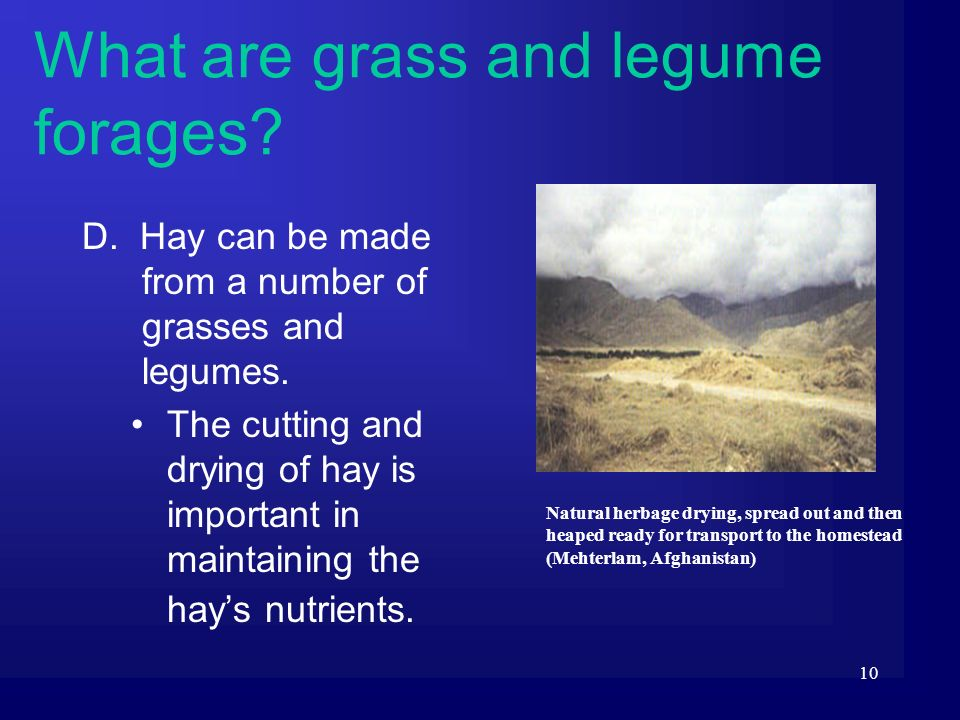 10 D. Hay can be made from a number of grasses and legumes. The cutting and drying of hay is important in maintaining the hays nutrients. What are gra
