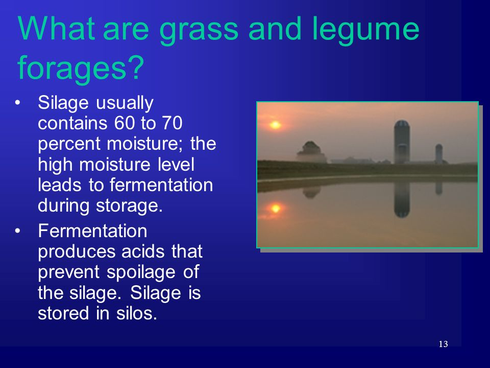 13 Silage usually contains 60 to 70 percent moisture; the high moisture level leads to fermentation during storage. Fermentation produces acids that p