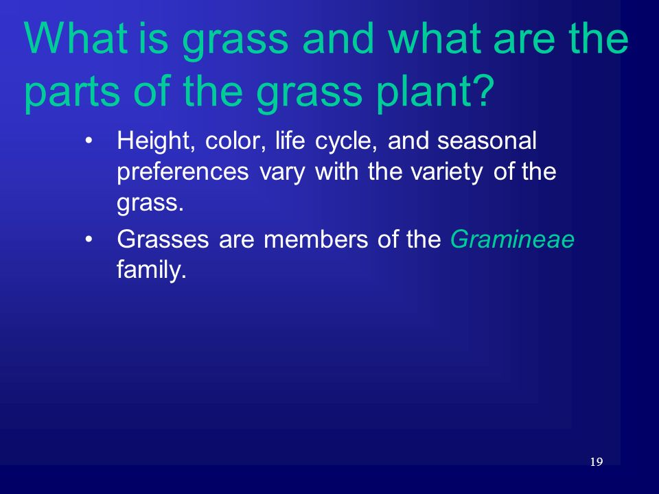 19 Height, color, life cycle, and seasonal preferences vary with the variety of the grass. Grasses are members of the Gramineae family. What is grass